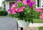 Easy Wave Petunias