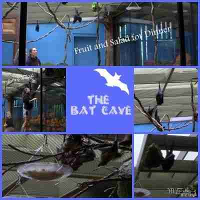 Indianapolis Zoo - The Bat Cave/ Daily Dish Magazine #zoo #indyzoo