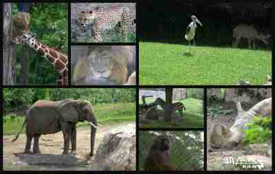 Indy Zoo - African Plains/ Daily Dish Magazine. #zoo #plains #