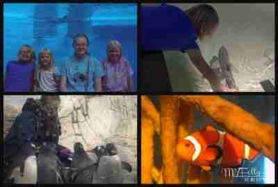 The Ocean at Indy Zoo/ Daily Dish Magazine #ocean #indyzoo