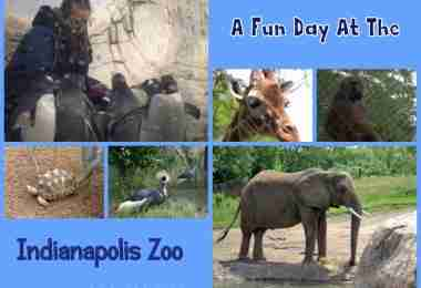 Indianapolis Zoo/ Daily Dish Magazine #indianapoliszoo #zoo #familyfun
