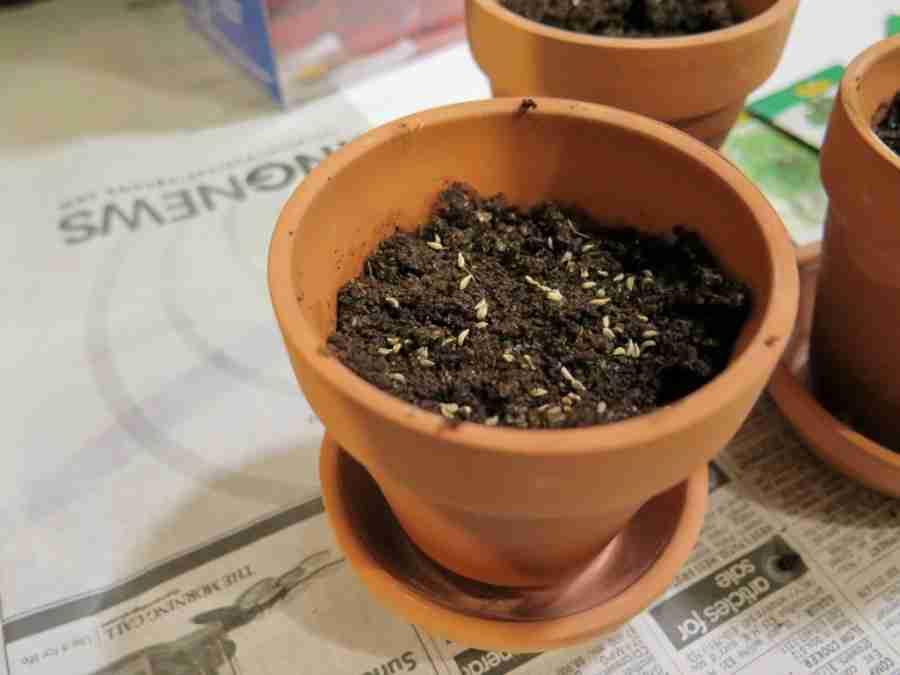 Chia Herb Garden Seeds