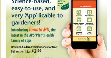 tomato md1