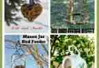 7 DIY Bird Feeder Tutorials