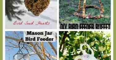 7 DIY Bird Feeder Tutorials