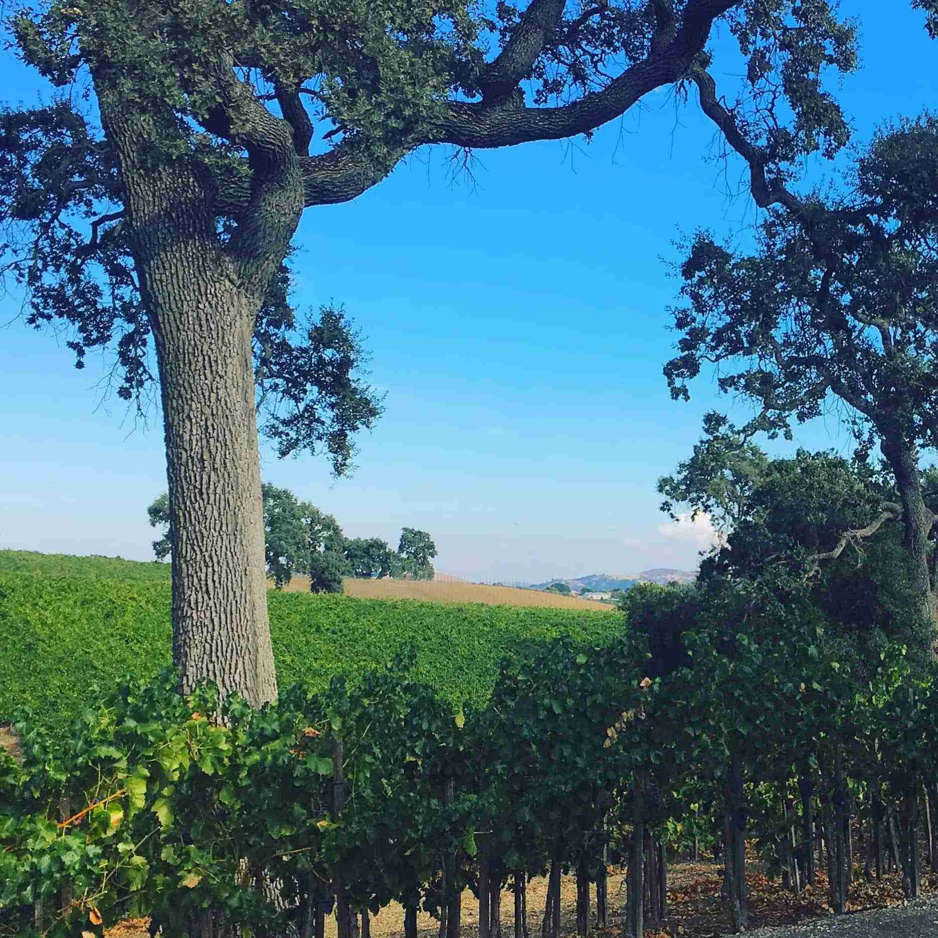 View from Treana Winery in Paso Robles, CA