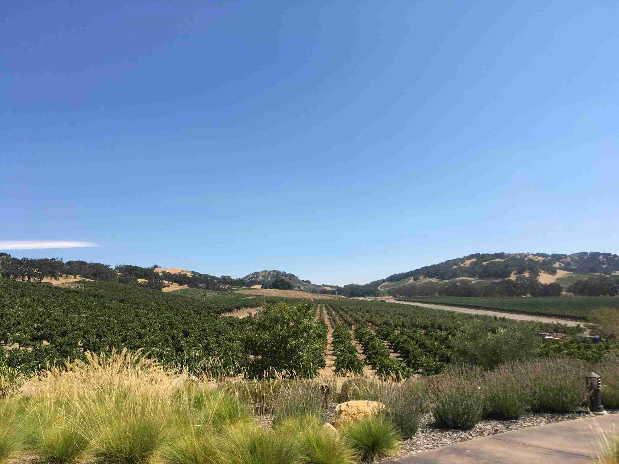 Vineyard View at Halter Ranch Winery. Paso Robles, CA