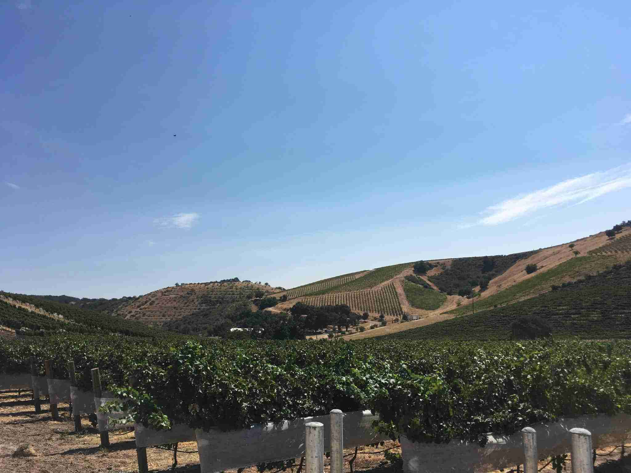 Vineyard View at Parrish Family Winery. Paso Robles, CA.