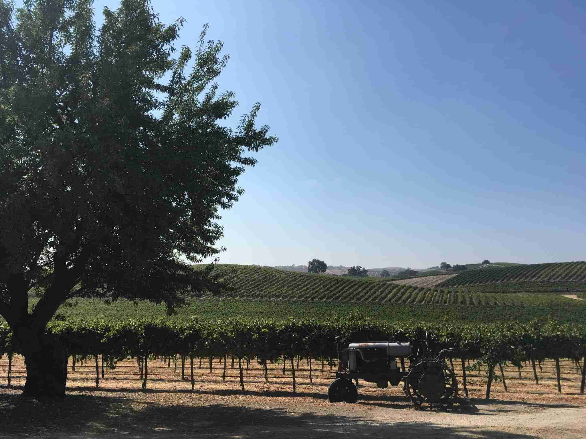Vineyard View of Pomar Junction Winery. Paso Robles, CA