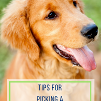 Tips for Picking a Family Dog