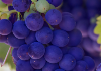 Napa Valley: Wineries and Beyond   Daily Dish Magazine