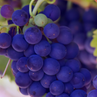 Napa Valley: Wineries and Beyond | Daily Dish Magazine