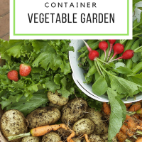 Starting a Container Vegetable Garden
