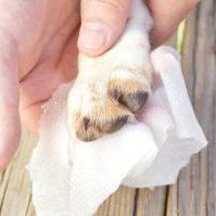 DIY Dog Wipes
